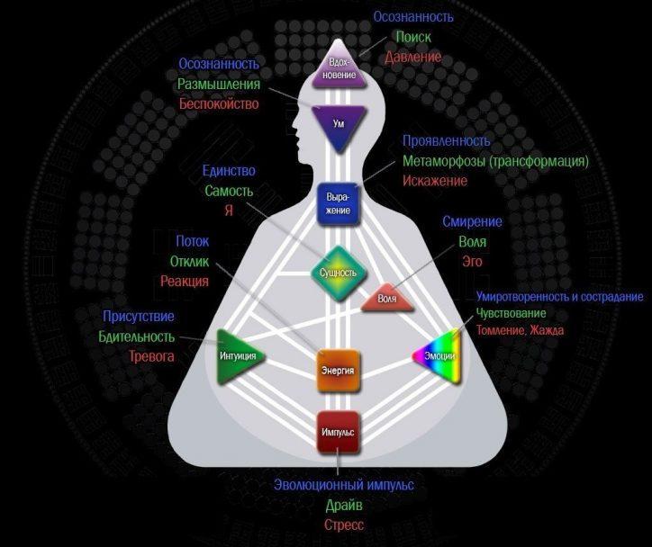 Расшифровка 9 центров в дизайн человека
